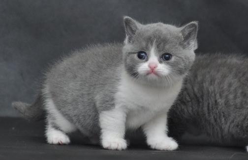 超萌可爱猫咪头