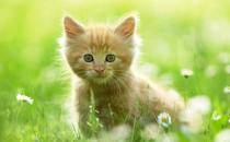 如何训练猫咪排泄习惯