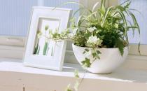 室内养花有哪些注意事项
