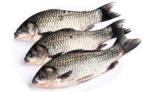 鱼的大小决定口感 八分大最适合烹饪