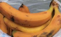 水果发霉了还能吃吗?对健康有没有影响?