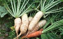 脾虚吃什么蔬菜好?脾虚吃什么杂粮好?