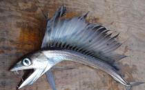 美国海滩惊现恐怖怪鱼,满嘴獠牙会吃人