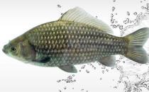 鱼肝富含维生素A 鱼类鲜为人知的5大营养