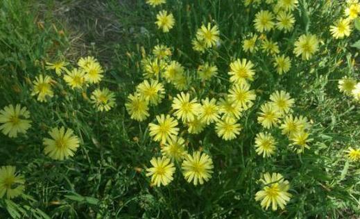 室内养花的学问:植物清新你的家