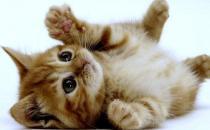 家中有萌宠:家里猫毛怎么处理?