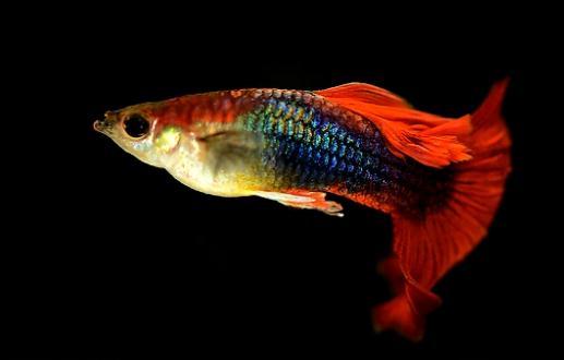 鱼图片大全可爱