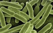 """经常""""潜伏""""于食物中的细菌有哪些?如何预防?"""