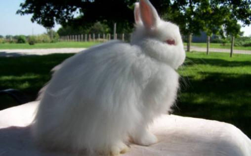 最可爱的兔子品种