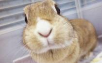 忌廉兔的简介-忌廉兔的价格