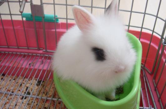 超可爱兔兔图片