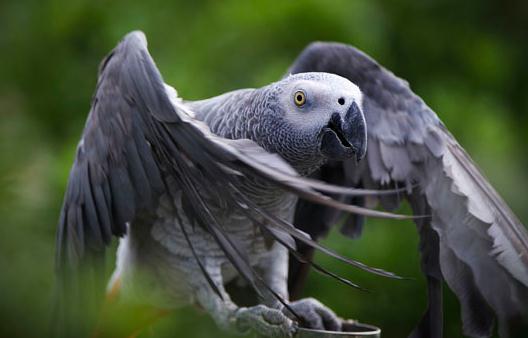 鸟类动物的特征