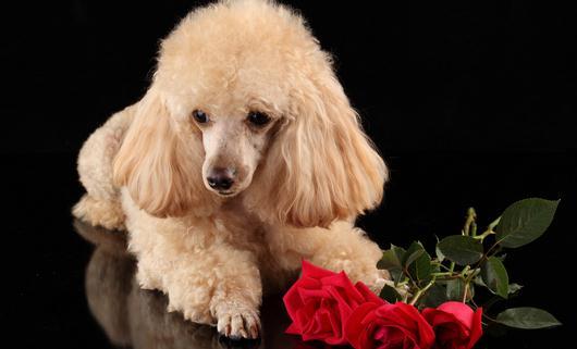 时间上最可爱的狗狗