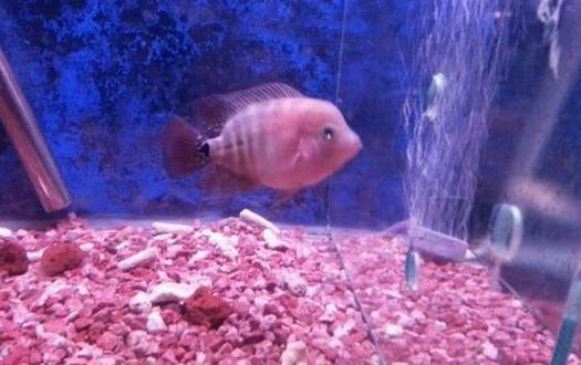 家里養魚應該多久換一次水?