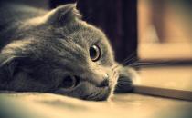 养猫的猫砂的选购技巧