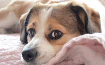 遛狗时防止狗狗太兴奋的方法