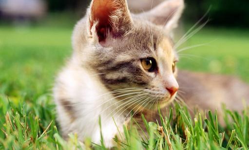 此举旨在防止麻药中的猫咪由于不会闭眼而眼干.