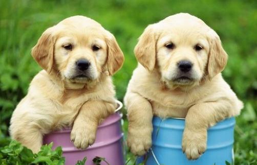 养宠物狗需要办理哪些手续
