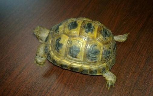 养乌龟对于水的管理