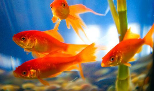 养金鱼保持水质的方法