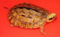 乌龟的生活习性 乌龟的寿命