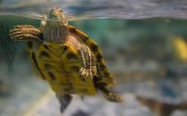 饲养乌龟的注意事项