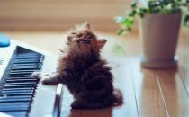 小猫的饲养管理方法