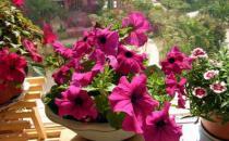 想在家里养花必看的养花技巧
