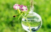 食醋在养花中竟有大作用?