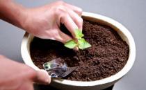 花盆土壤板结的原因和解决办法