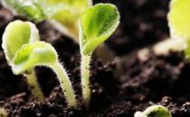 家中盆栽土壤消毒的方法