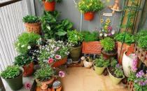 家庭养花的施肥技巧
