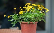 基质栽培定植后如何管理?