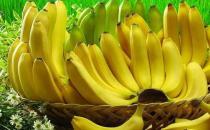 教你如何辨认是芭蕉还是香蕉