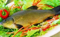 丁桂鱼有什么营养价值与功效?