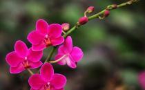 花卉缺素症是什么原因?
