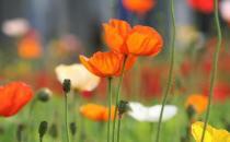 夏季养什么花最好?夏季如何养花?
