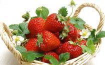 草莓下火调肠胃 个头适中口感好