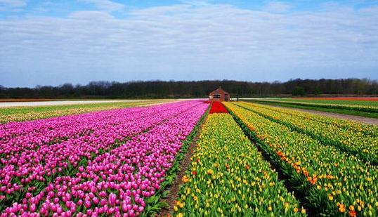 来荷兰欣赏花车的盛会吧!