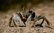 吃螃蟹要蘸醋的原因介绍