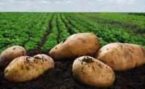 土豆不能和哪些东西一起吃