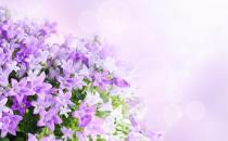 这样让鲜花更加鲜艳哦!