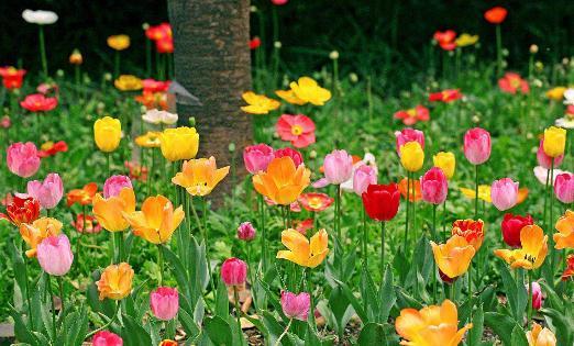 花卉在家居中有哪些作用?