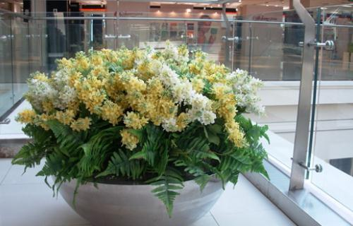 什么花卉最适合在室内养?