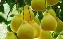 立秋吃什么水果养肝护肝