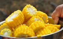 水果玉米的简介 水果玉米的营养价值