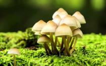 蘑菇的功效 蘑菇的做法