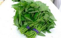 藤藤菜是什么?藤藤菜的做法