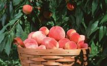 桃子李子杏子三种水果的挑选方法
