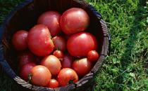 吃西红柿的5个禁忌你都了解么?